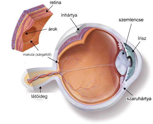 látóideg gyulladása